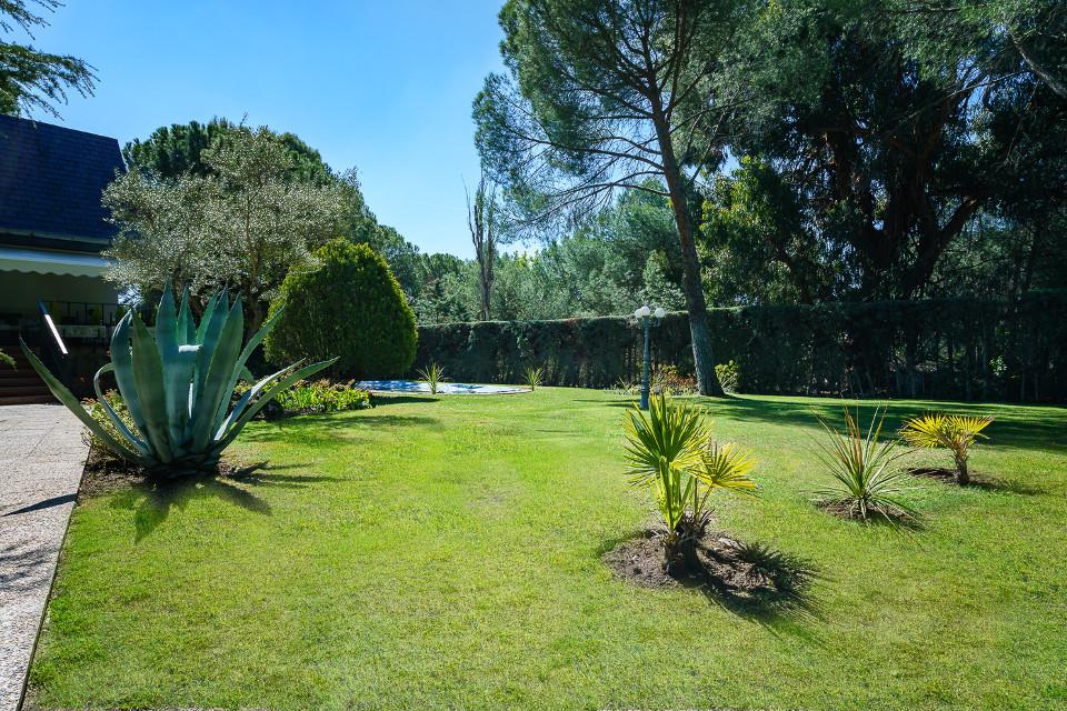home_staging_jardin_con_cactus_theunissen